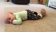 Компилација од видеа со смешни мачиња