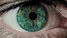 Зеленото око е вистинска реткост