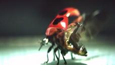 Лети, лети бубамаро...